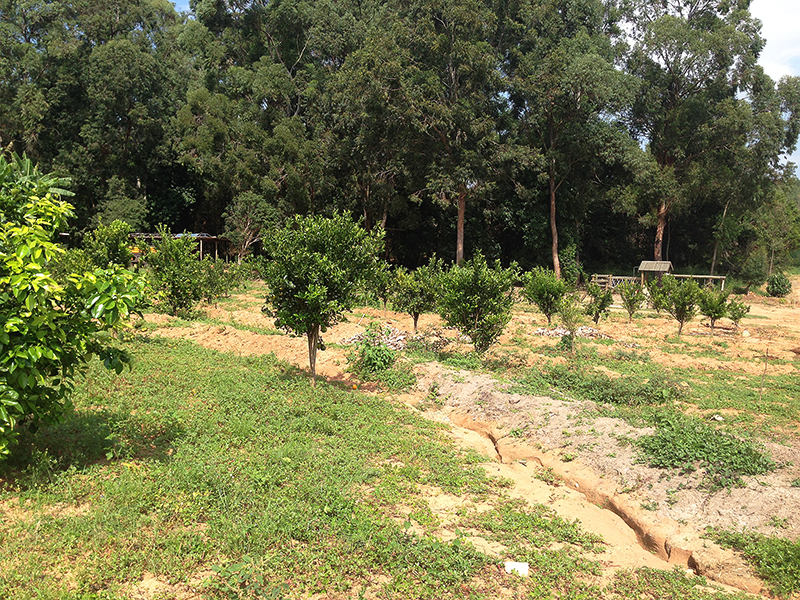 sitio sassafraz 11