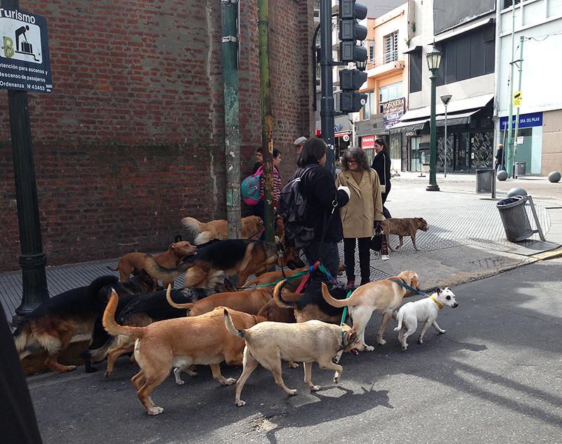 buenos aires paseadores de perros